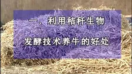 :秸秆养牛技术圈养牛肉牛养殖场视频