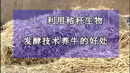 :养牛系列教程之秸秆养牛技术肉牛养殖技术视频