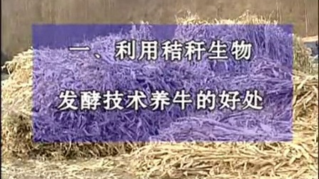 :发酵秸秆养牛技术之农村肉牛养殖技术视频