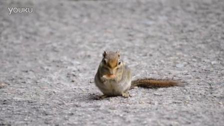 三清山吃着饼干的超萌小松鼠