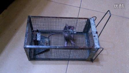 老鼠笼使用步骤图解