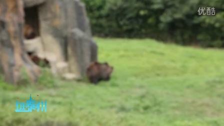逛泰州 泰州 旅游 杭州 杭州野生动物园 西湖 暑期亲子两日游