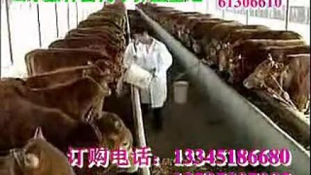 养牛技术发酵床养牛致富经肉牛场视频
