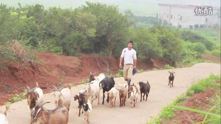 湖南衡阳耒阳山羊养殖致富农民牛人民间农业仁义湾头视频