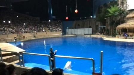 20140803北京动物园海洋馆海洋剧场4-白鲸表演