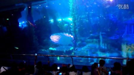青岛海底世界 - 专辑 - 优酷视频