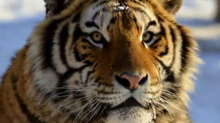 远东北亚巨虎的频道-优酷视频