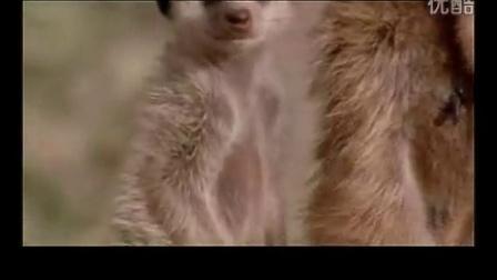 搞笑动物配音2