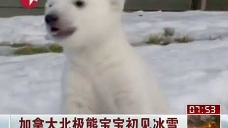 可爱又呆萌的北极熊宝宝
