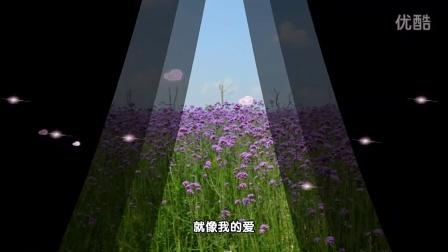 许绍洋 - 花香