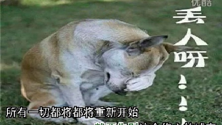 伤心痛的照片动物