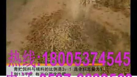 鲁西黄牛养殖技术视频