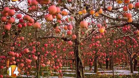 苹果花的解剖结构图