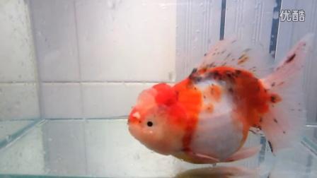 彩铅金鱼步骤图解