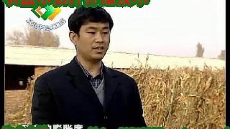 河南农盛乐秸秆发酵剂发酵玉米芯秸秆养牛技术视频