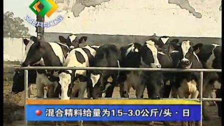 奶牛育成牛的管理视频