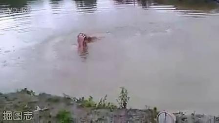 当汪星人看到主人假装溺水以后。。。