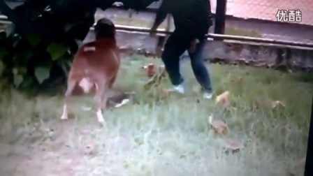 【搞笑视频】山羊疯狂的威胁传球