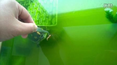 树叶粘贴画乌龟图片大全