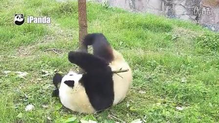 用树叶做熊猫步骤图解