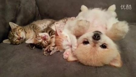 和喵们一起睡觉,醒来后怕吵醒小喵们而一直保持不动继续睁眼装睡的汪星人。。。真是蠢萌到哭啊!