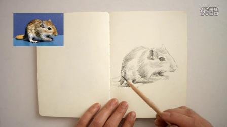 【素描动物】小仓鼠150416