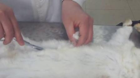 家兔的内部结构示意图