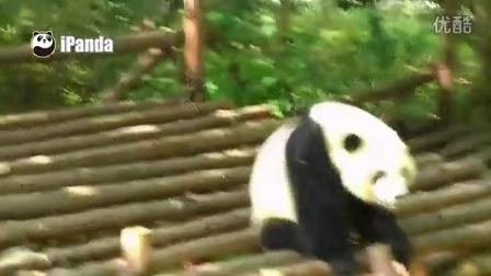 熊猫串珠步骤图解