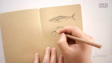 【素描动物】鱼的画法150526