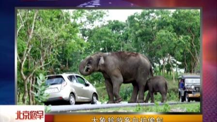 大象趁游客自拍偷包 北京您早 150603再也不诱拐了