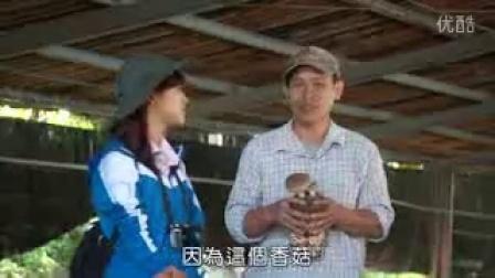 香太空包菇水里上安菇�鍪悠德枷�_高清视频食用菌shiyongjun