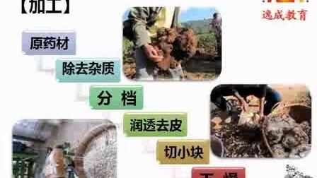 茯苓-茯苓为寄生在松树-100种常见中药材_高清视频食用菌shiyongjun