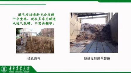 口蘑种植的效益高秸秆种植栽培口蘑�i,食用菌shiyongjun