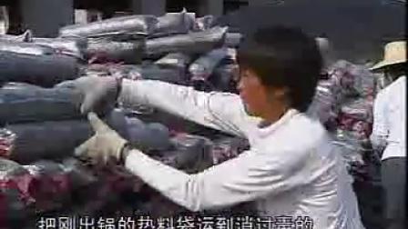 袋料香菇栽培工厂化生产技术_高清视频食用菌shiyongjun