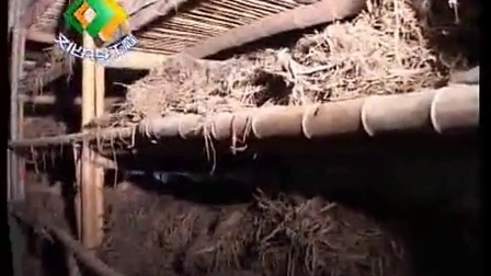 如何种植蘑菇无公害立体栽培技�c,食用菌shiyongjun