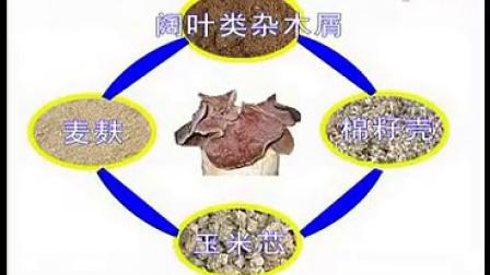 什麽是白背黑木耿白背木耳种植栽培技�c,食用菌shiyongjun