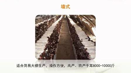 袋装黑木耳四季标准化栽培新技术_高清视频食用菌shiyongjun