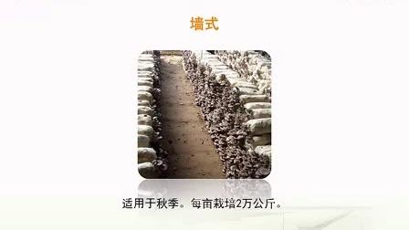 袋装平菇种植技术之四季标准化栽培新技术_高清视频食用菌shiyongjun