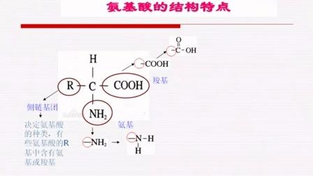 生物微课视频《氨基酸与蛋白质》