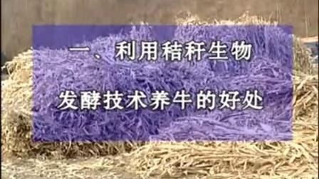 秸秆养牛技术牛成本利润养羊场视频