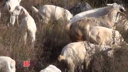 郧西县便民牛羊养殖专业合作社产品加工过程视频