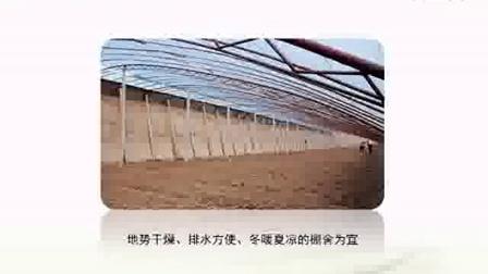四季种植茶树菇标准化栽培新技�c,食用菌shiyongjun