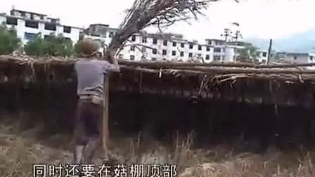 竹荪种植需要注意什么之竹荪高产栽培技�c,食用菌shiyongjun