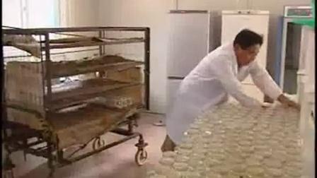 北虫草人工种植虫草人工培育技术_高清视频食用菌shiyongjun