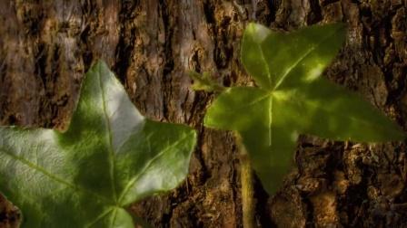 万物生长灵动延时摄影《奇迹森林》