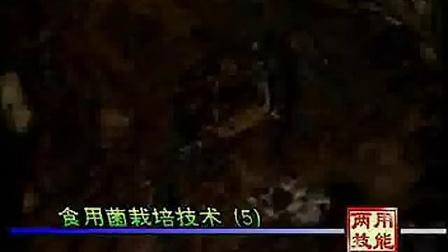 食用菌的培训班栽培技�c,食用菌shiyongjun