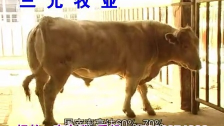 牛羊驴最新养殖技术三元牧业_标清视频