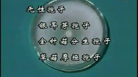 学习掌握食用菌关键栽培技术不论是那食用菌都能购栽培_高清视频食用菌shiyongjun