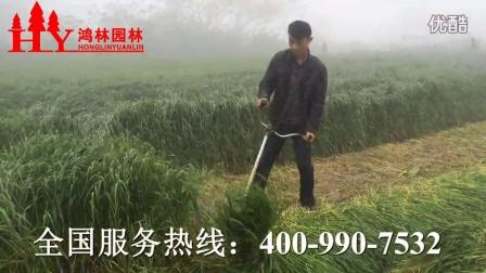 养殖割草收割黑麦草皇竹草象草等各种牧草割草机播放视频