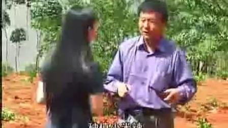 茶树菇的栽培技术与科教片下载视�c,食用菌shiyongjun